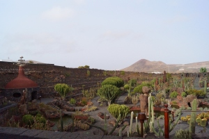 View of the cactus garden